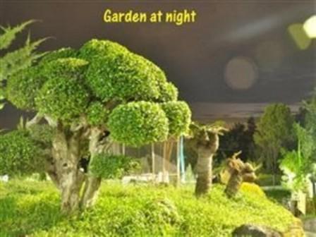 Raffles Villa Garden