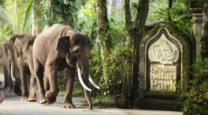 Bali Elephant Safari Park Taro (ADMISSION ONLY)