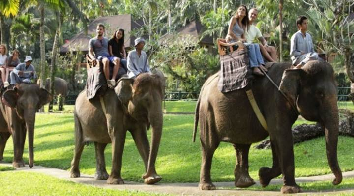 Bali Elephant Safari Ride (E)